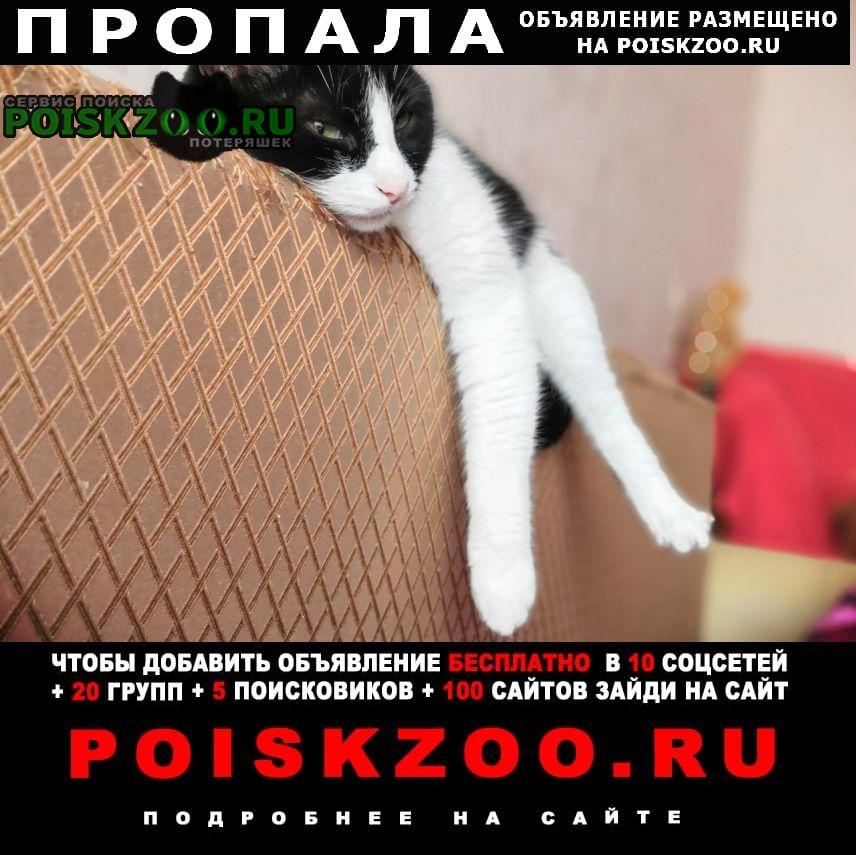 """Пропал кот по имени """"марсель"""" г.Одинцово"""