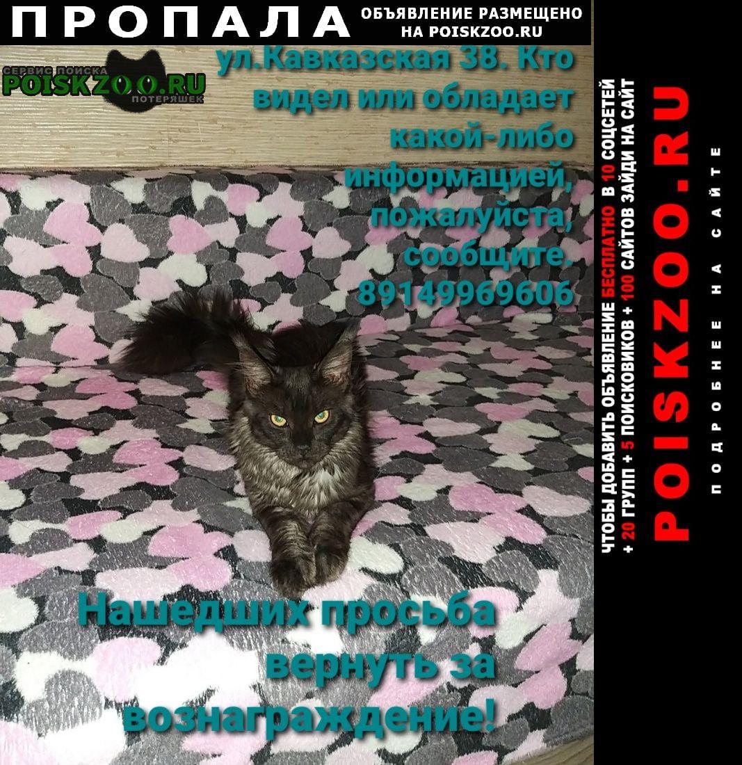 Пропала кошка г.Петропавловск-Камчатский