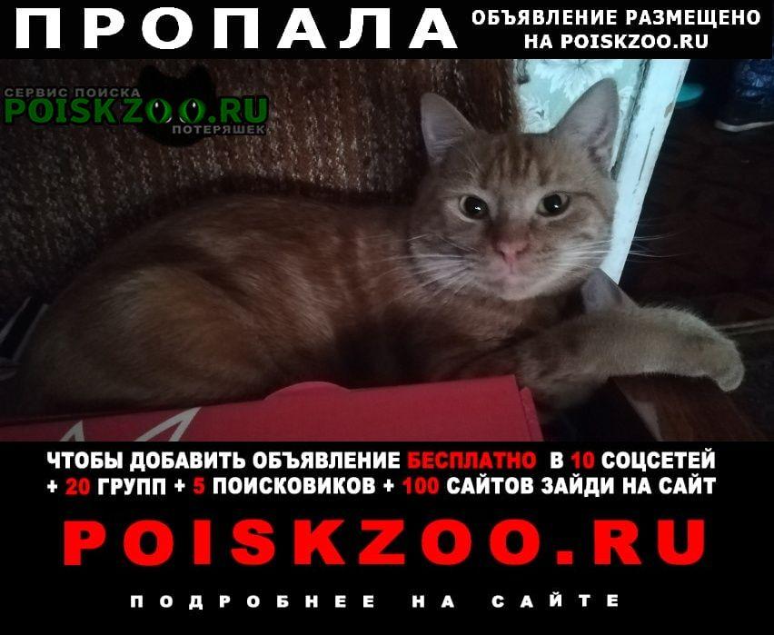 Пропал кот рыжий  морская набережная, 9 г.Санкт-Петербург