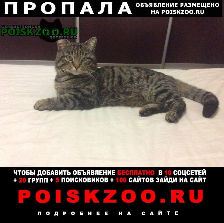 Пропал кот   помогите пожалуйста найти г.Симферополь