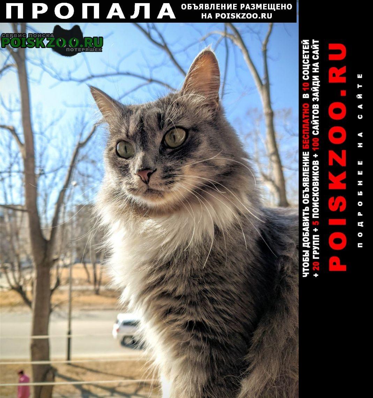Пропала кошка г.Хабаровск