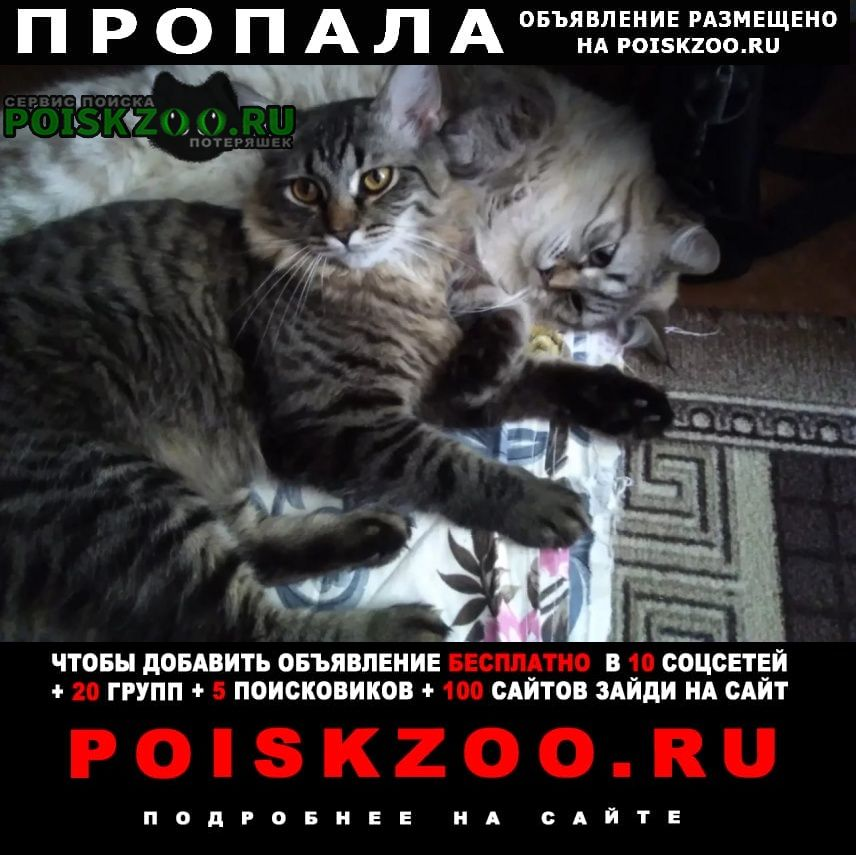 Пропал кот г.Волгоград
