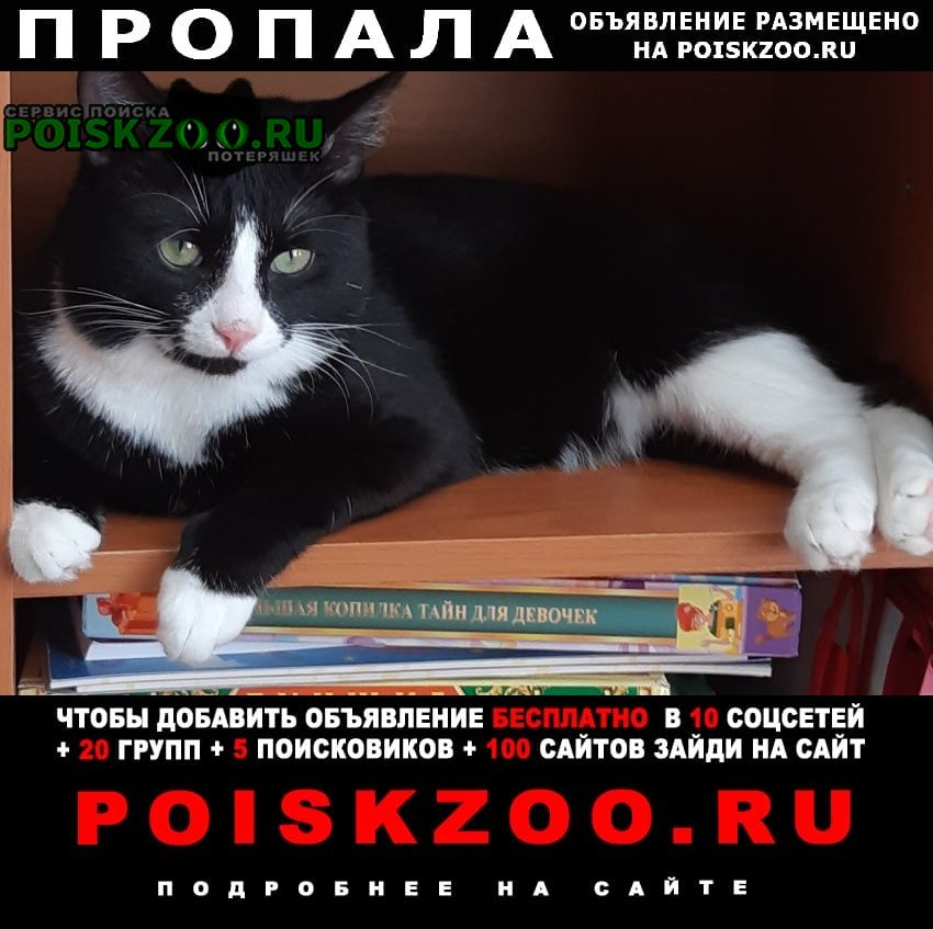 Пропал кот мурзик Москва
