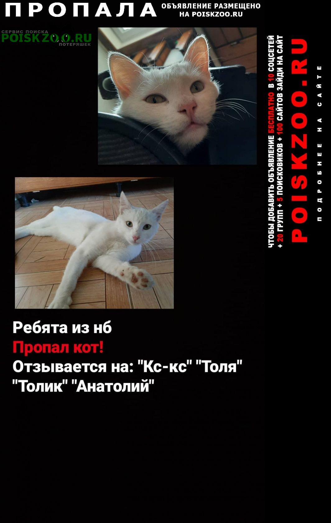 Пропал кот в посёлке новоберезанском. Кореновск