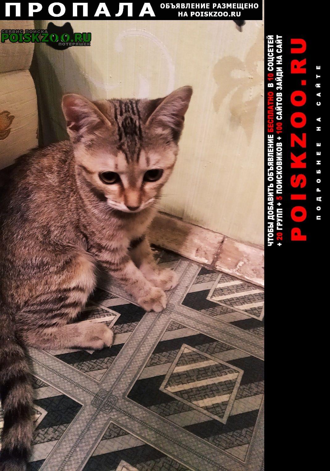 Пропала кошка кто видел её можете отдать Казань