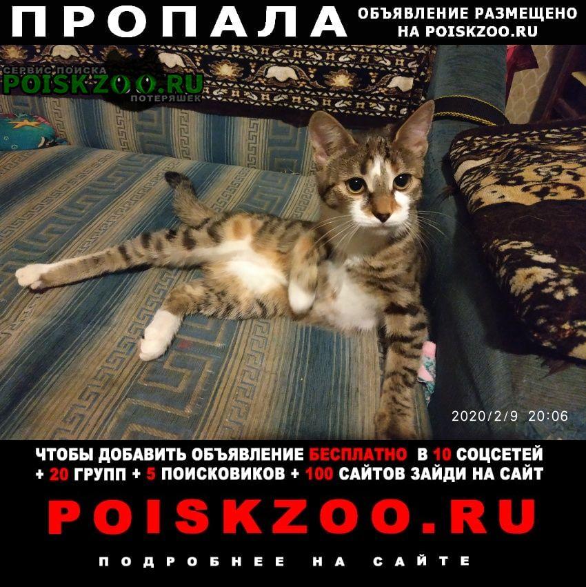 Пропала кошка, можайский район, 66 кв.кунцево Москва