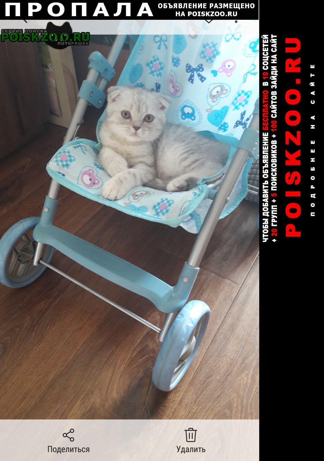 Пропал котёнок Арамиль