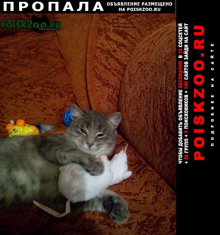 Нижний Новгород Пропала кошка котик