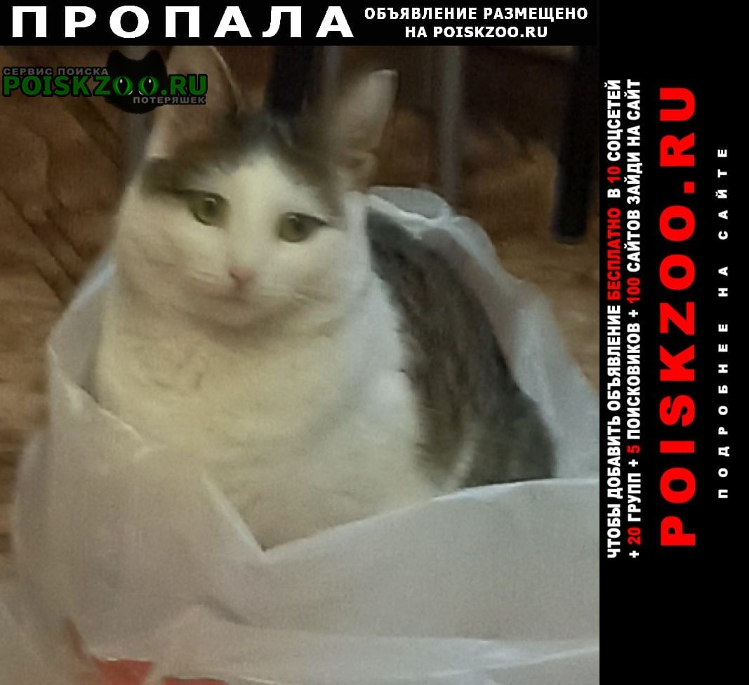 Киржач Пропала кошка