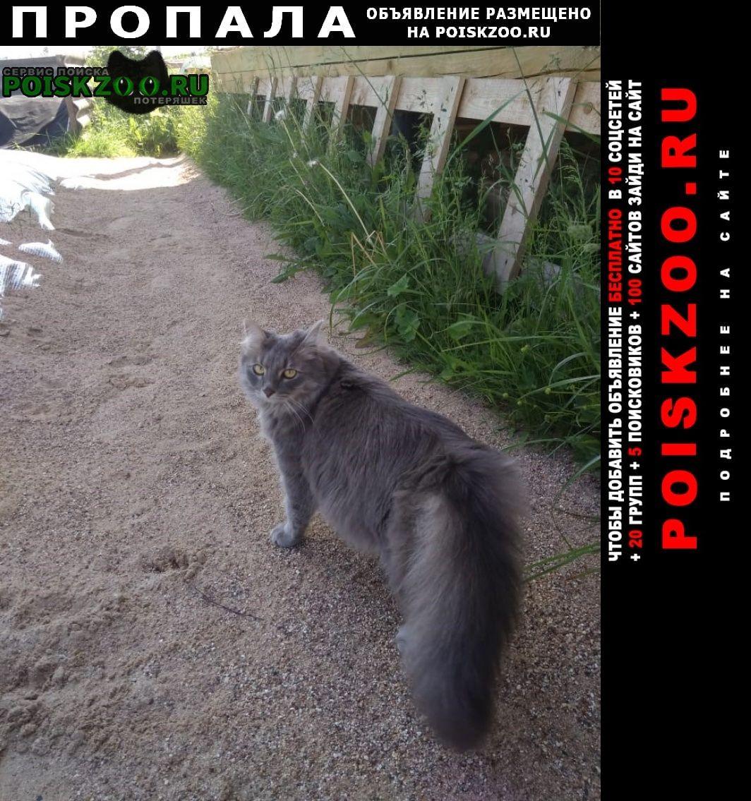 Руза Пропала кошка в рузском районе, д.федчино