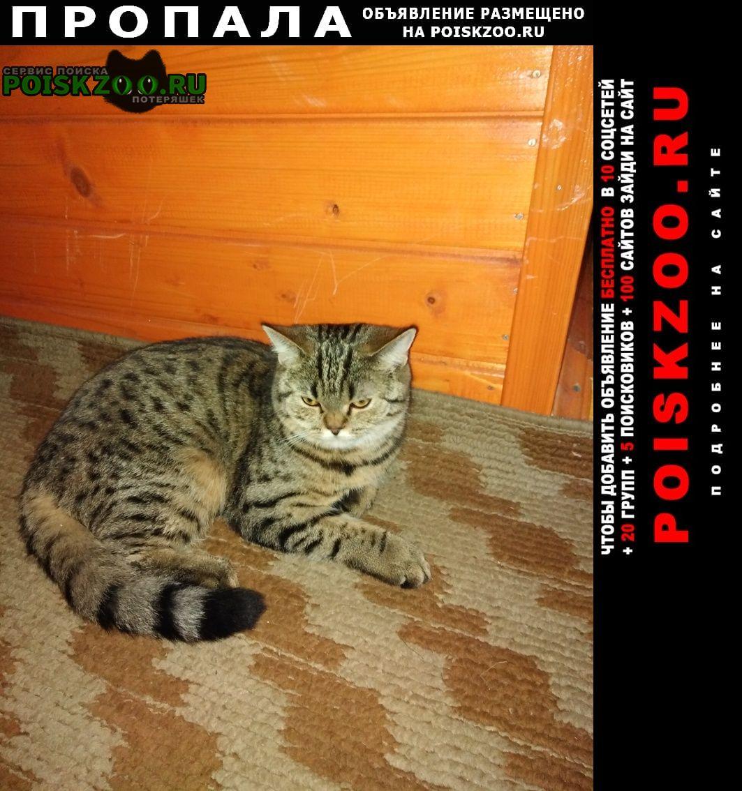 Москва Пропала кошка в д. митькино одинцовский район