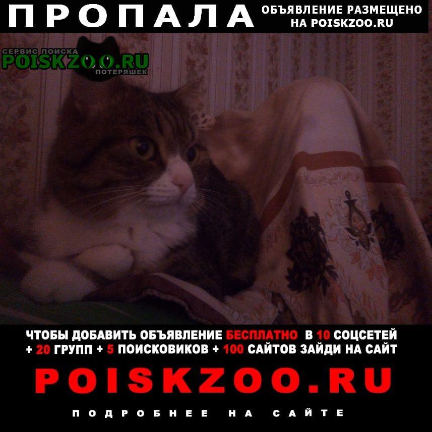 Абакан Хакасия Пропала кошка помогите