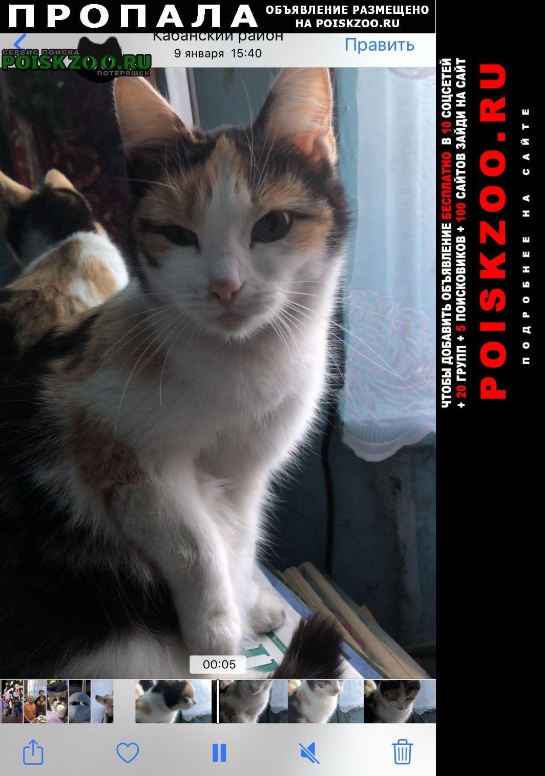 Ангарск Пропала кошка трехцветная