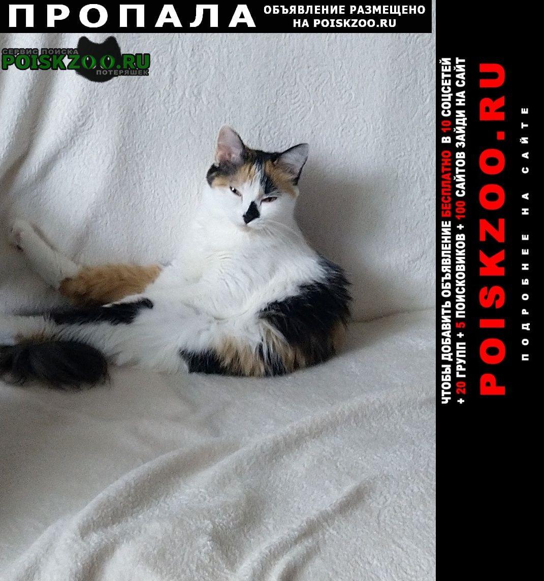 Сургут Пропала кошка