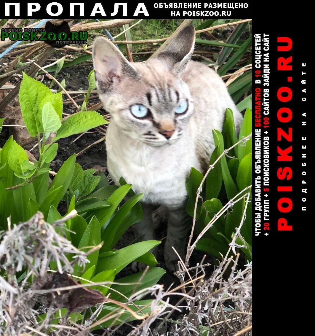 Серпухов Пропала кошка девон-рекс