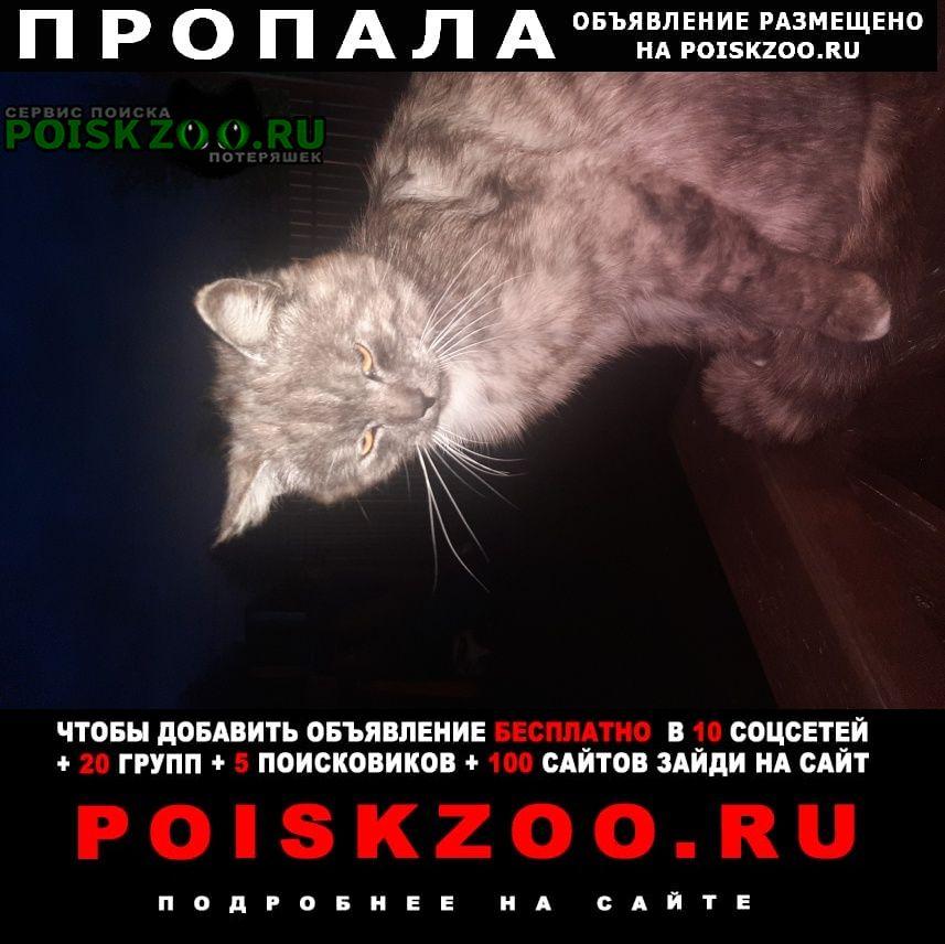 Солнечногорск Пропала кошка кот, кличка симба