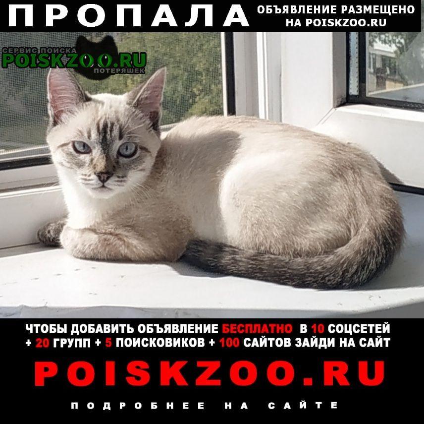 Уфа Пропала кошка