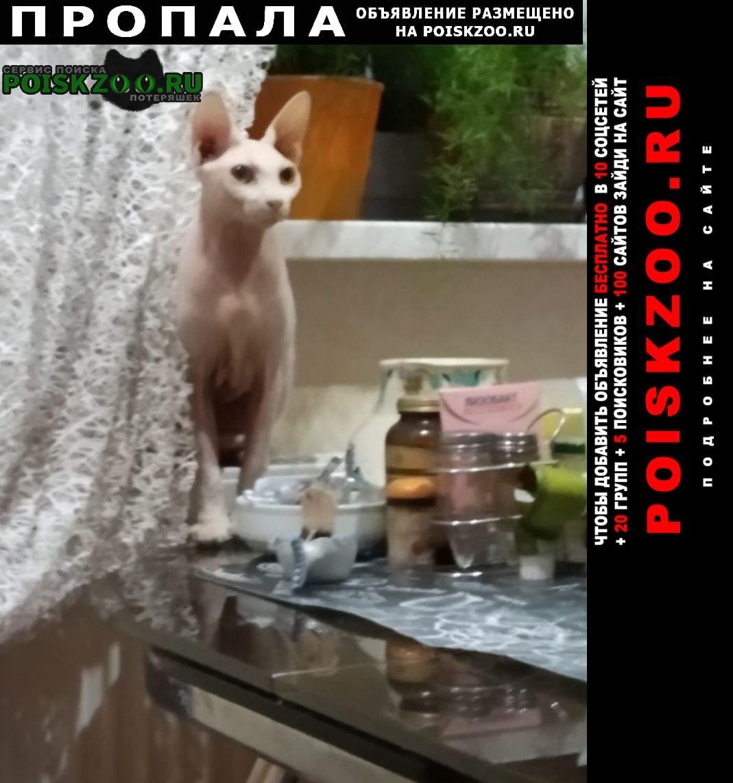 Щелково Пропала кошка