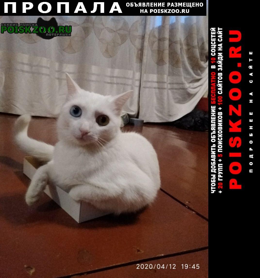 Благовещенск (Амурская обл.) Пропала кошка глаза разного цвета