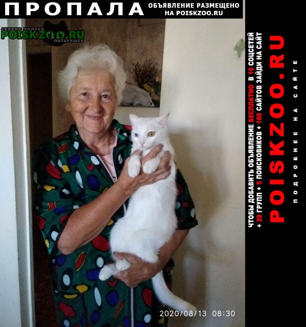 Благовещенск (Амурская обл.) Пропала кошка белая, разные глаза