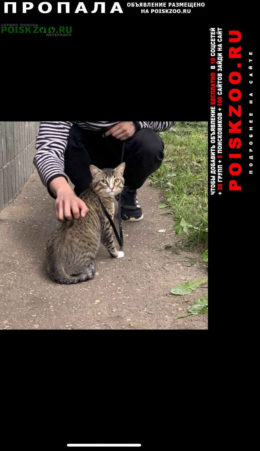 Калининград (Кенигсберг) Пропала кошка