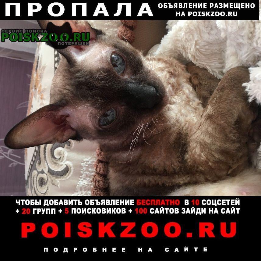 Балашиха Пропала кошка кличка лили 7 августа