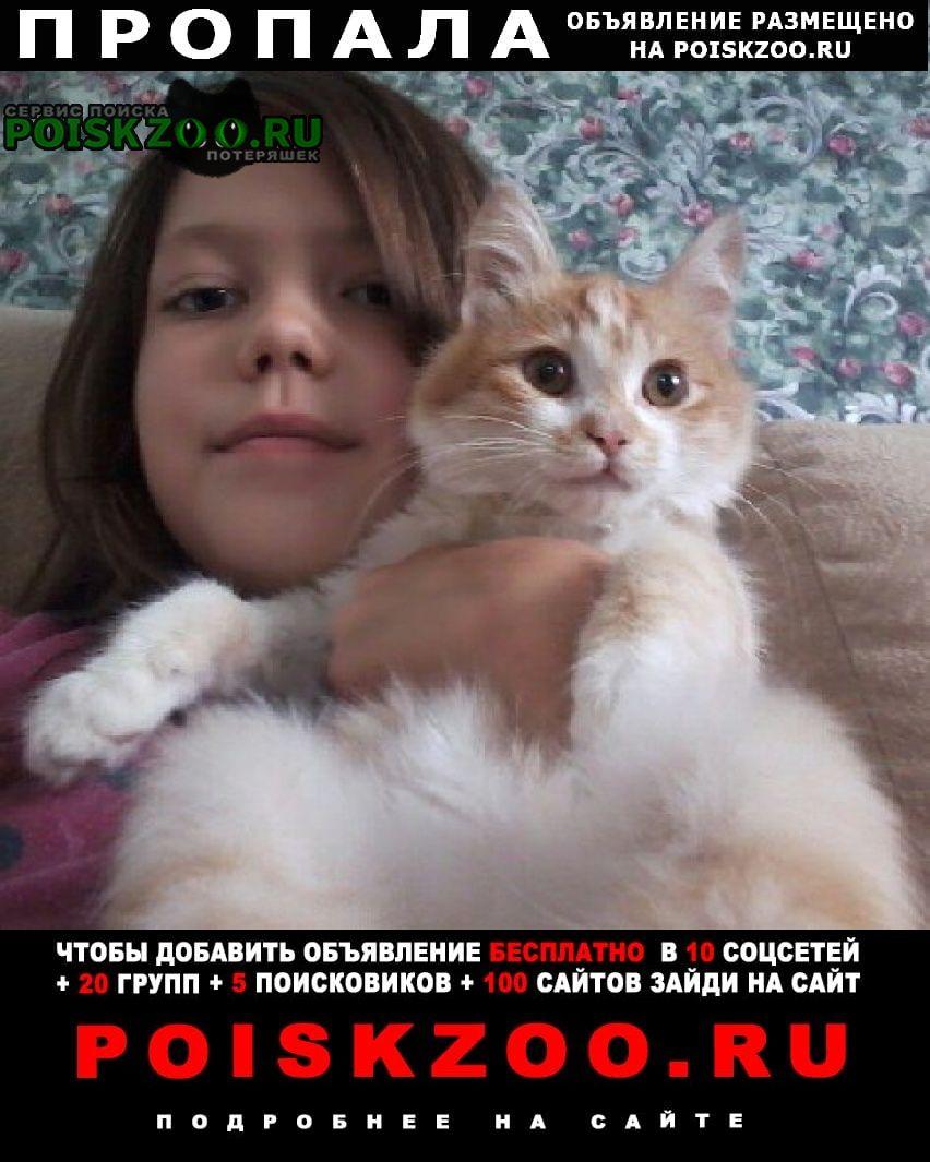 Оренбург Пропала кошка