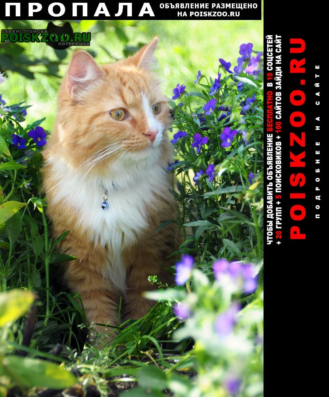Питкяранта Пропала кошка кот