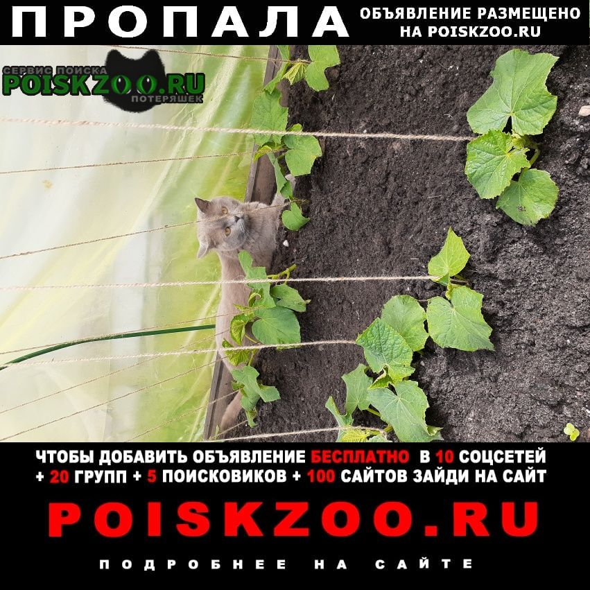 Санкт-Петербург Пропала кошка помогите найти кота
