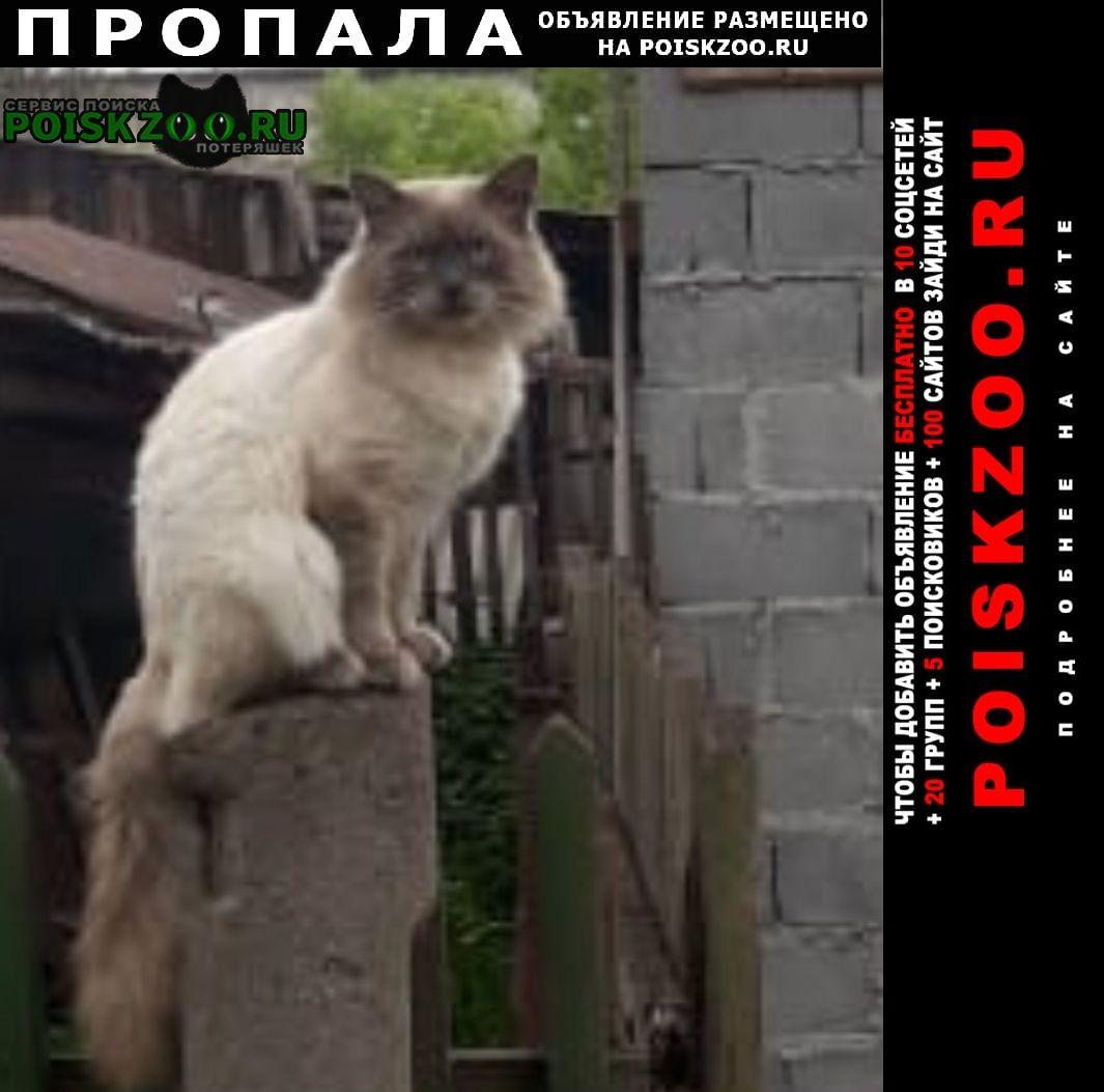 Нижний Тагил Пропала кошка кот.