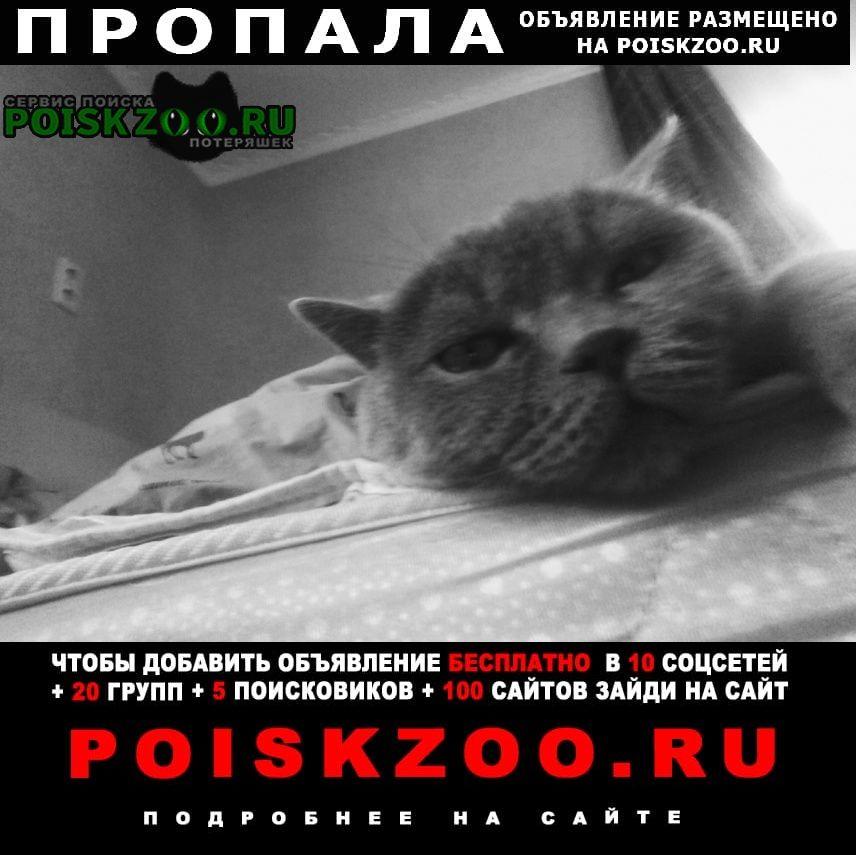 Дедовск Пропала кошка наш нюсик