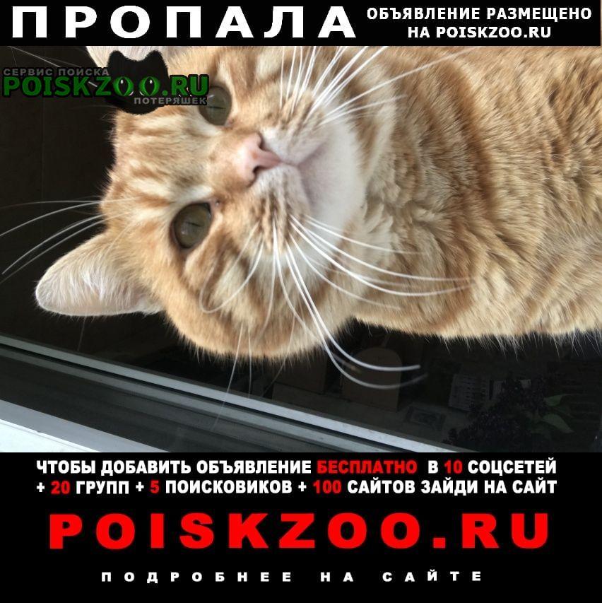Курск Пропала кошка