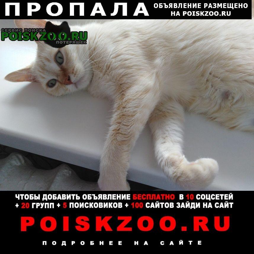 Смоленск Пропала кошка верните за вознаграждение
