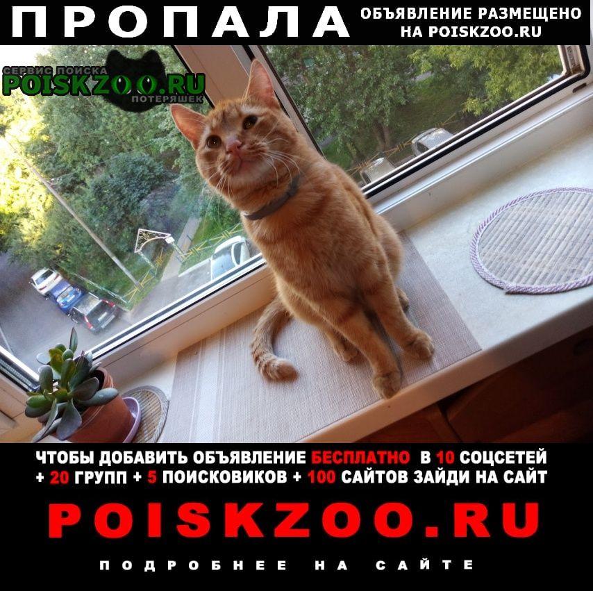Москва Пропала кошка рыжий кот