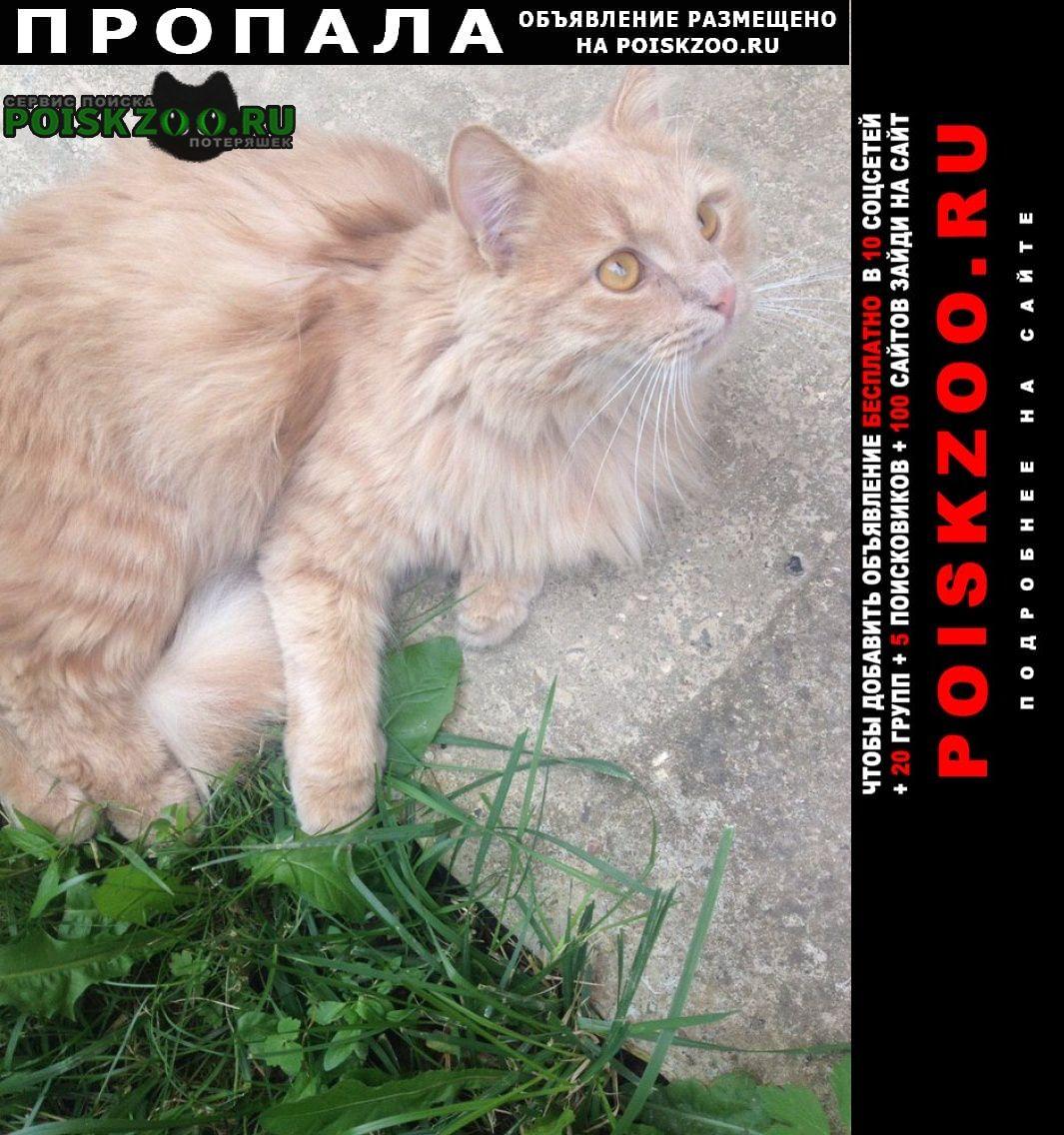 Пропала кошка рыжий кот Истра