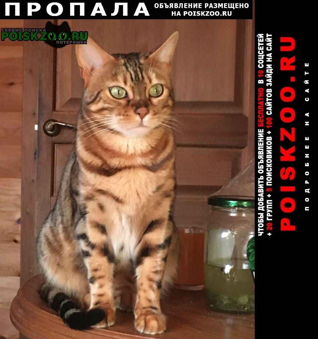 Пропала кошка бенгальской породы Сургут