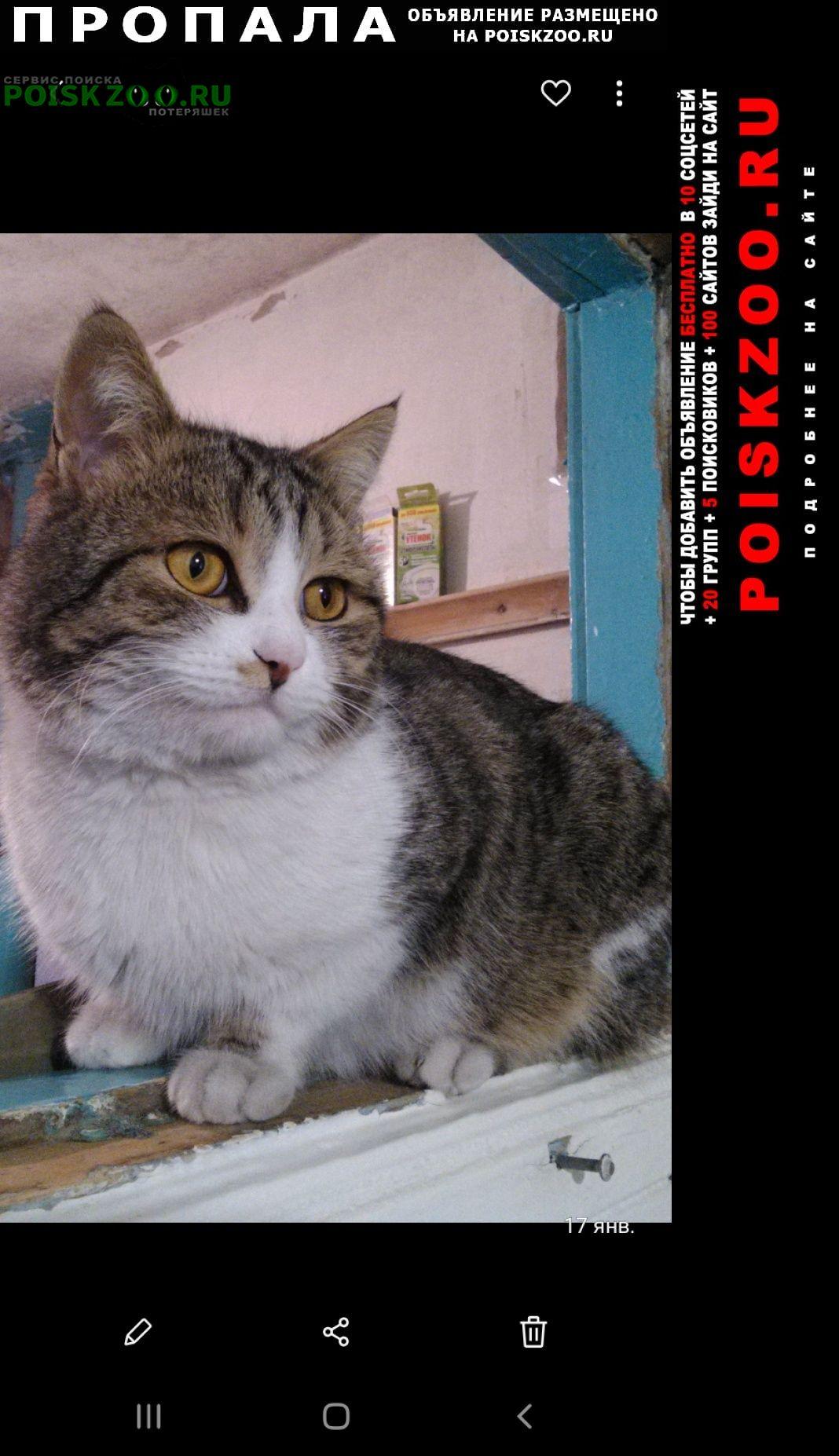 Прокопьевск Пропала кошка.. кот