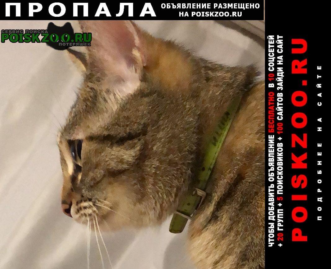Пропала кошка ищем кошку Хабаровск