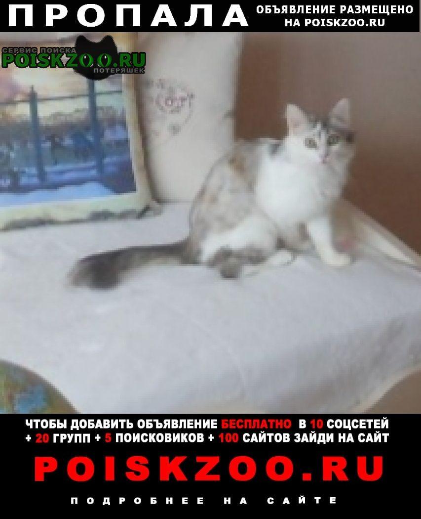Пропала кошка 10 000 вознаграждение нашедшему кота тим Орел