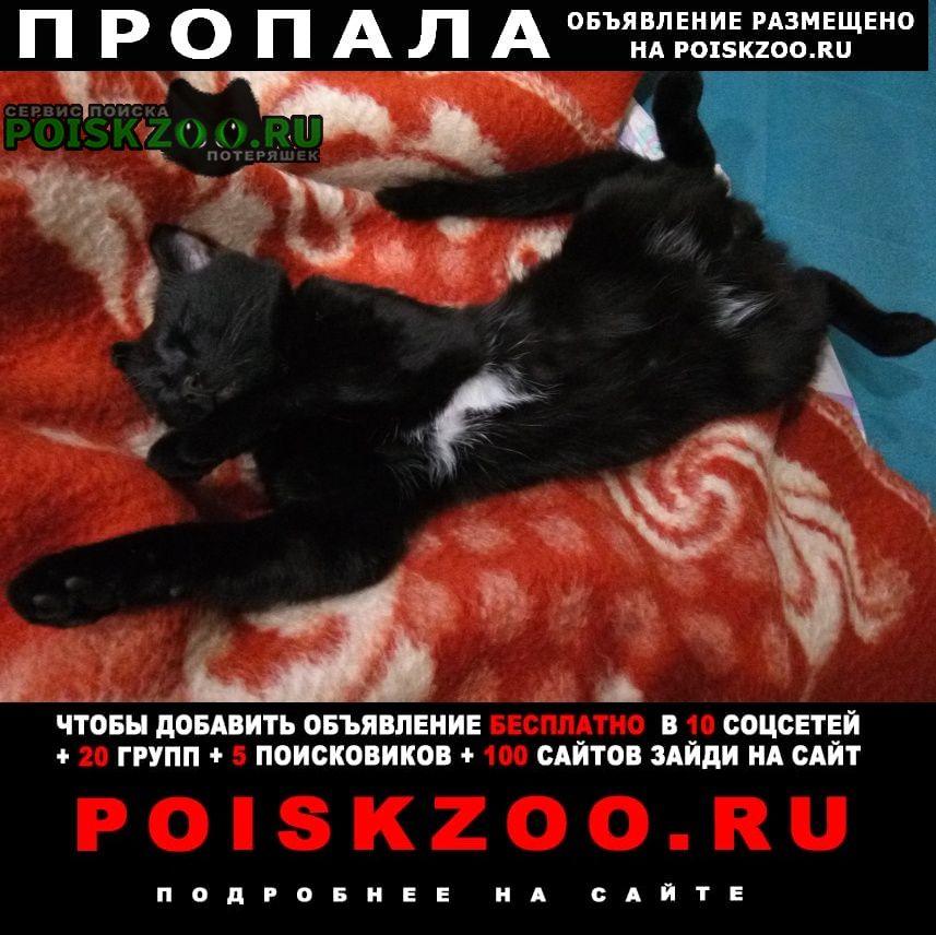 Пропал кот черный шерлок. Шелехов
