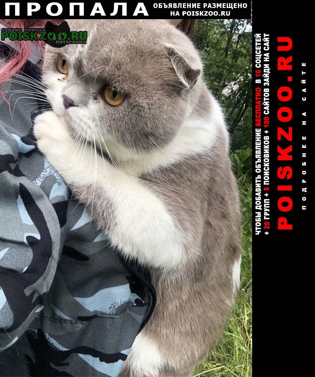 Томск Пропала кошка кот отзывается на кличку пусик