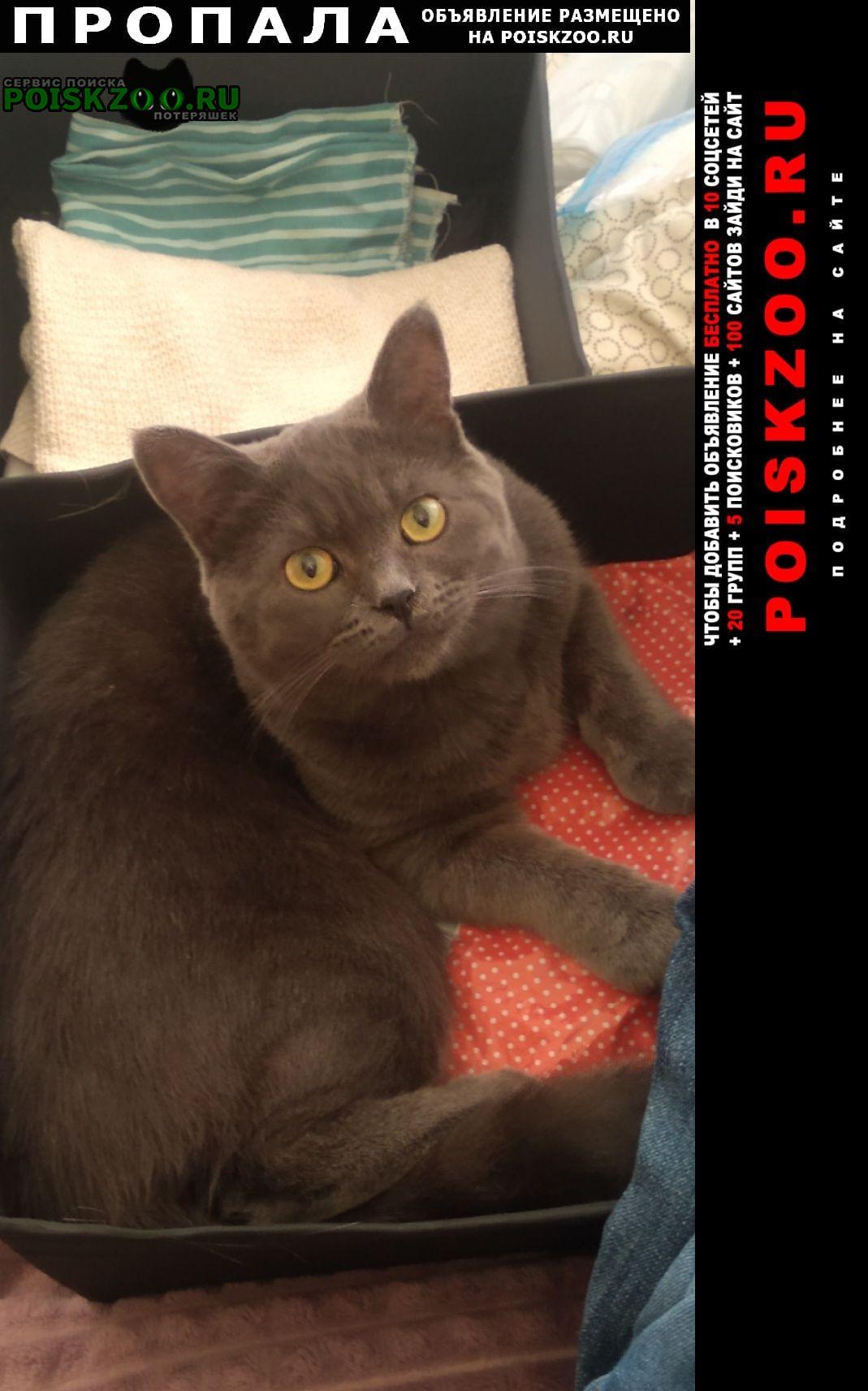 Ростов-на-Дону Пропала кошка помогите пожалуйста