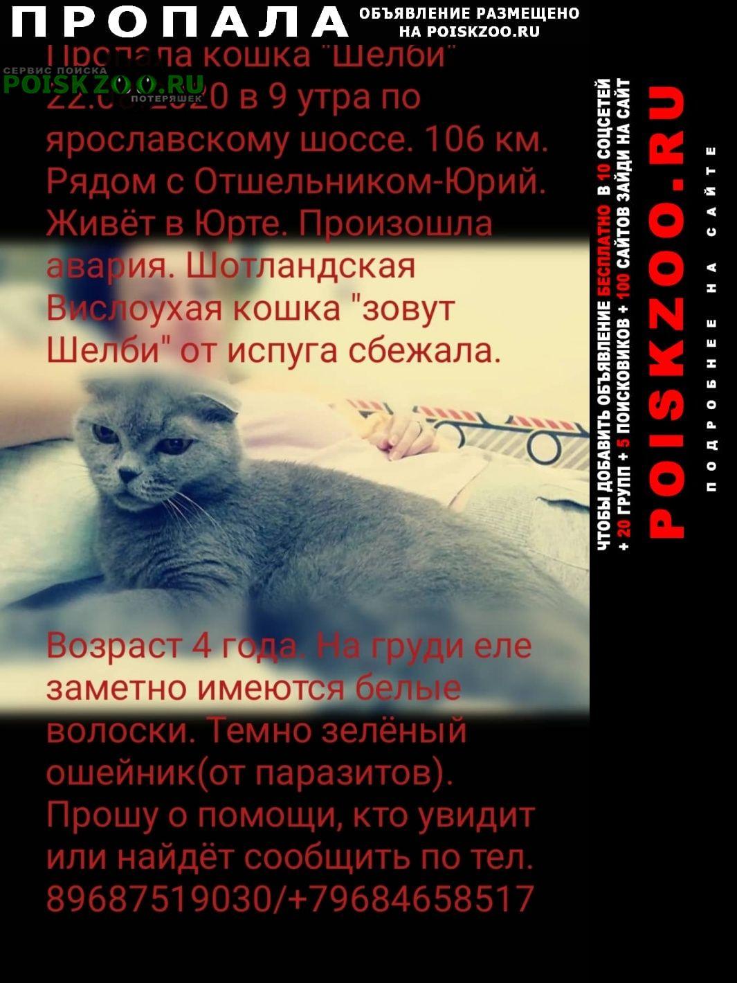 Пропала кошка sos. ярославское шоссе, 106 км.холмогоры Александров