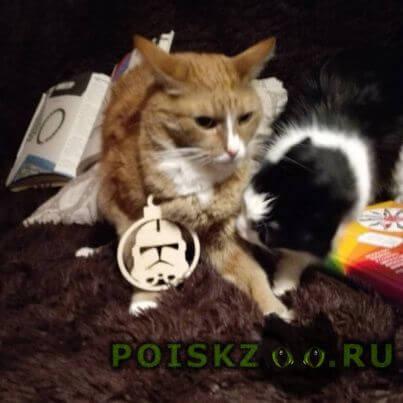 Пропал кот г.Липецк