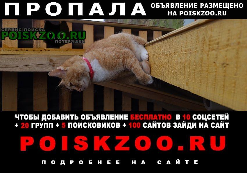 Пропала кошка.. Нарофоминск