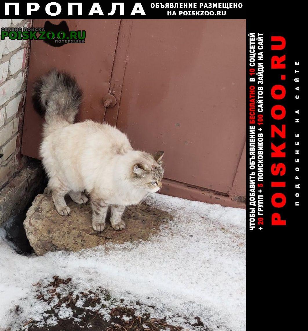 Пропала кошка Курган