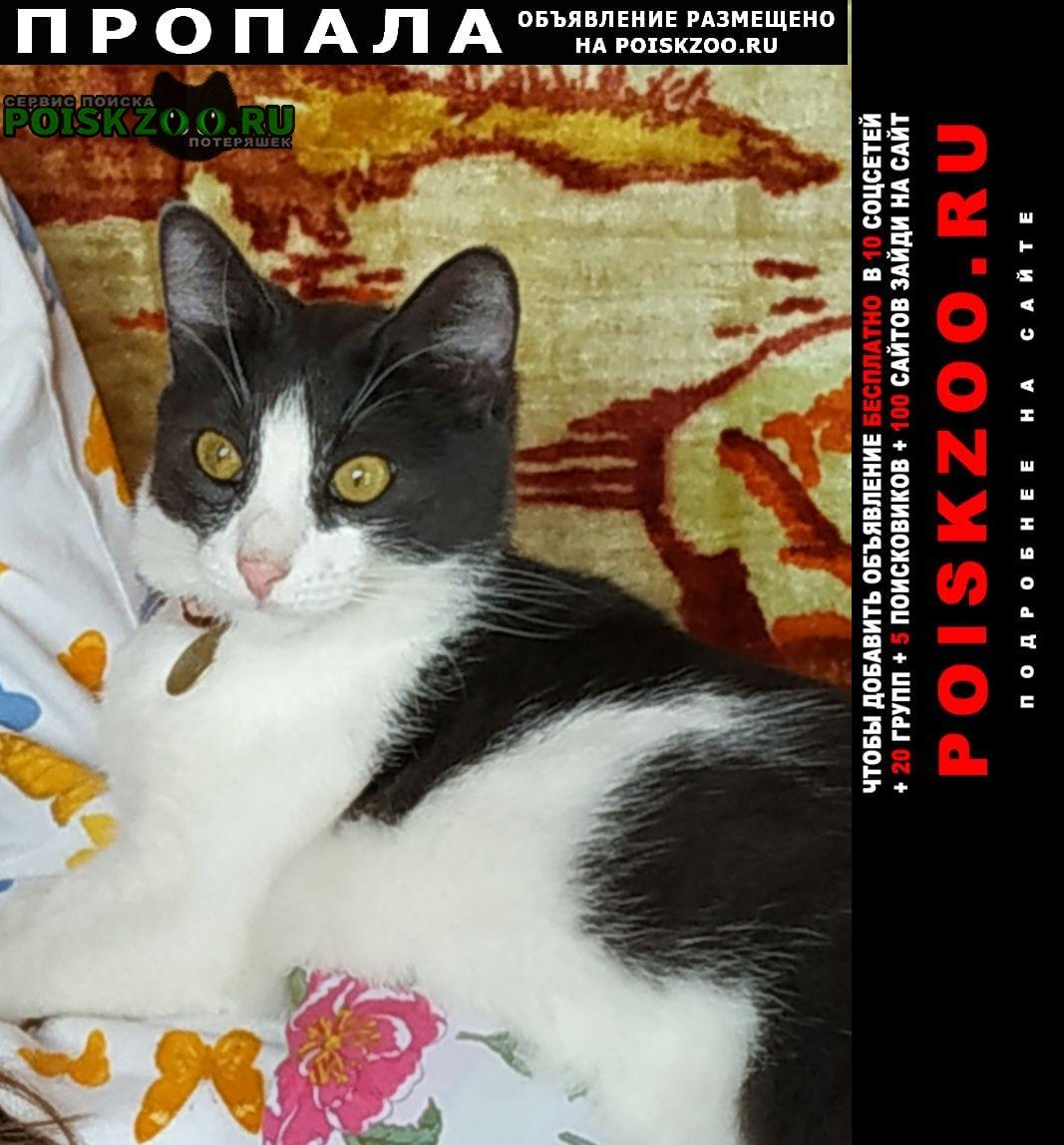 Одинцово Пропала кошка