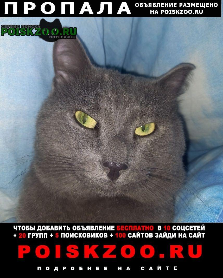 Омск Пропала кошка нужна ваша помощь