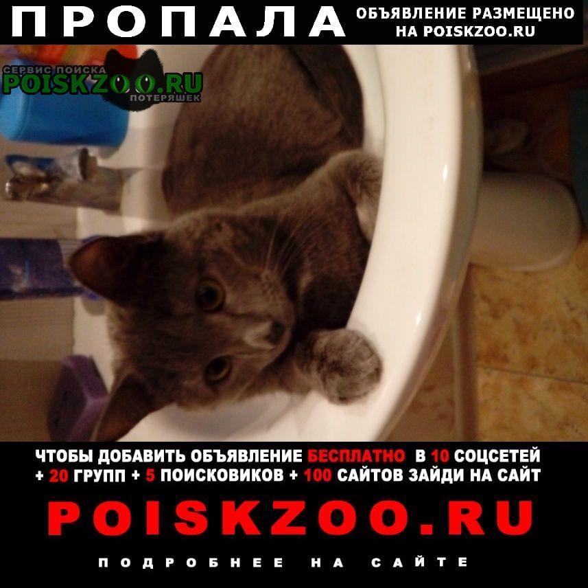 Видное Пропала кошка помогите найти котика