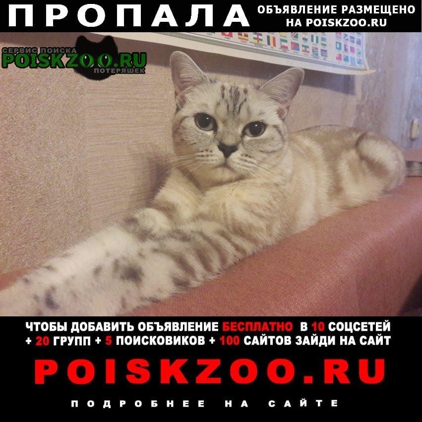 Астрахань Пропала кошка тэя